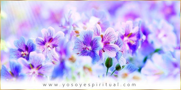 Flores nuevas y ausencia de plagas | Saint Germain