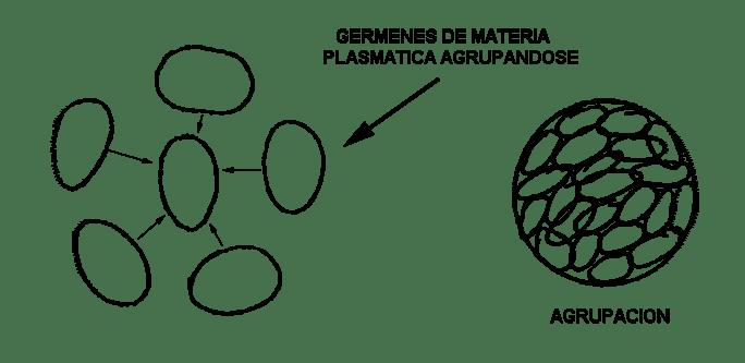 gérmenes de materia plasmática tipo mars